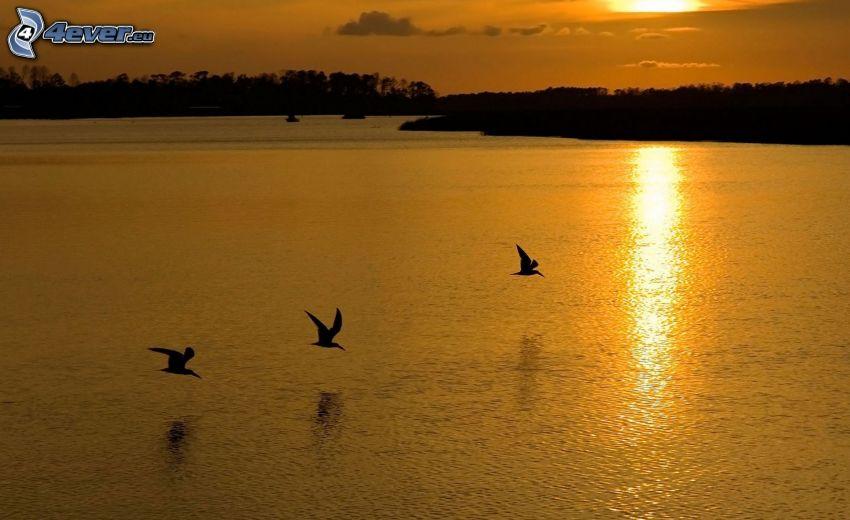 solnedgång över flod, fåglar