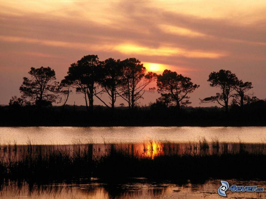 solnedgång över flod, siluetter av träd, moln, svag sol