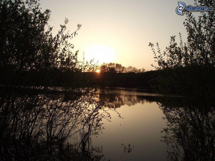 solnedgång över flod, siluetter av träd