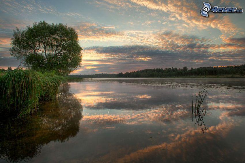 solnedgång över sjö, ensamt träd, spegling