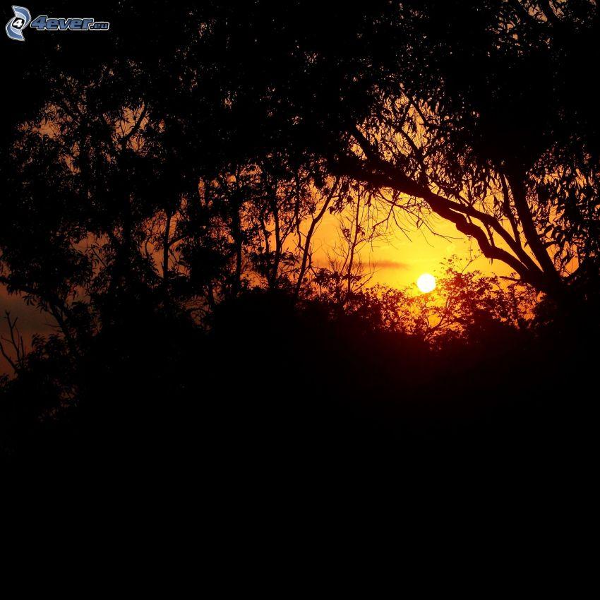 solnedgång över skogen, siluetter av träd