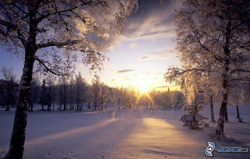solnedgång på vintern, snöklädda träd, snöigt landskap