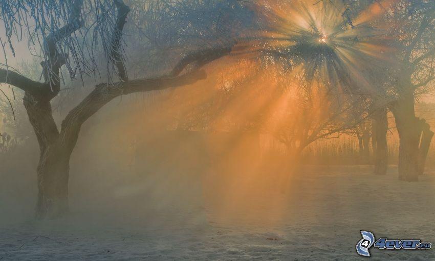 solstrålar i skog, snöig skog