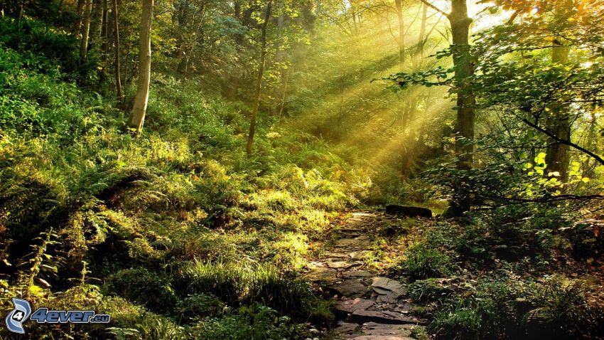 solstrålar i skog, trottoar, grönska