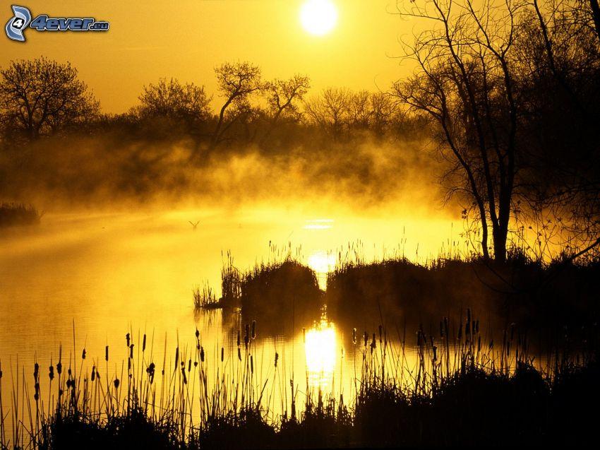 soluppgång, sjö, träd, ånga