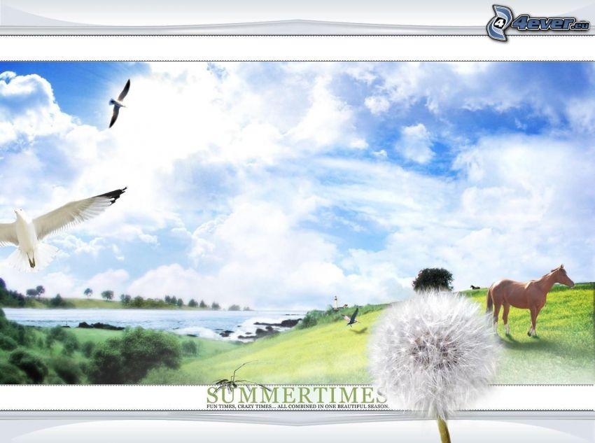 sommar, måsar, brun häst, sjö, avblommad maskros