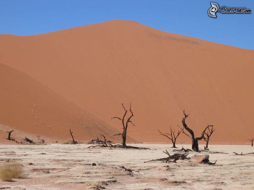 Sossusvlei, torra träd, sanddyn