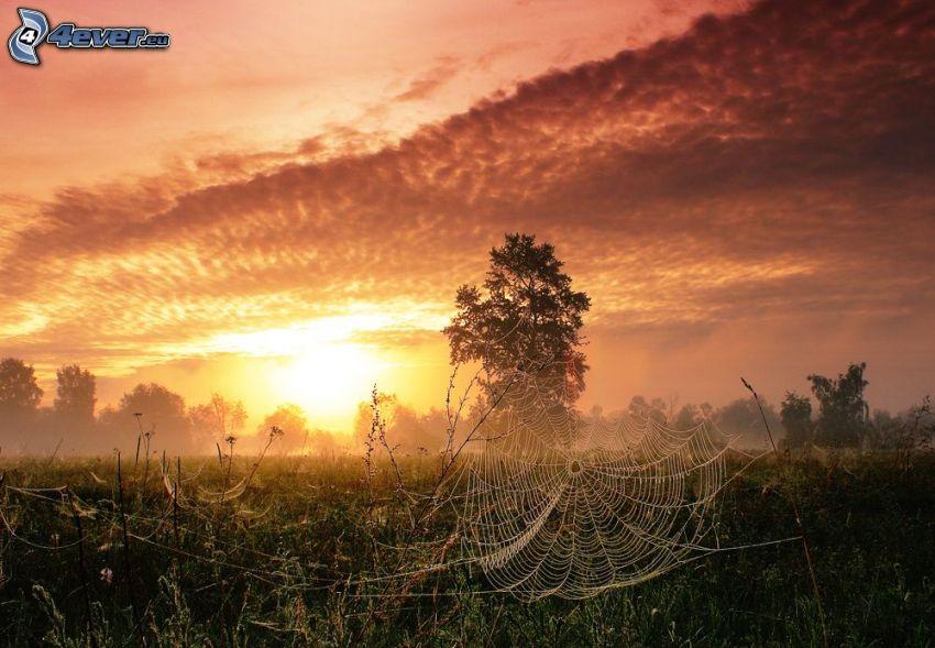 spindelnät på gräs, träd, solnedgång över äng, orange himmel