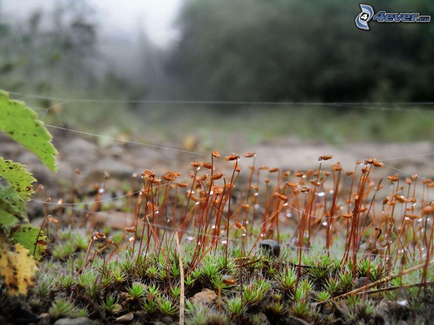 spindelnät på gräs