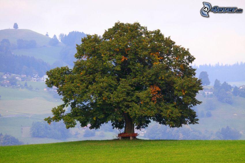 spretigt träd, ensamt träd, äng, bänk, utsikt över landskap