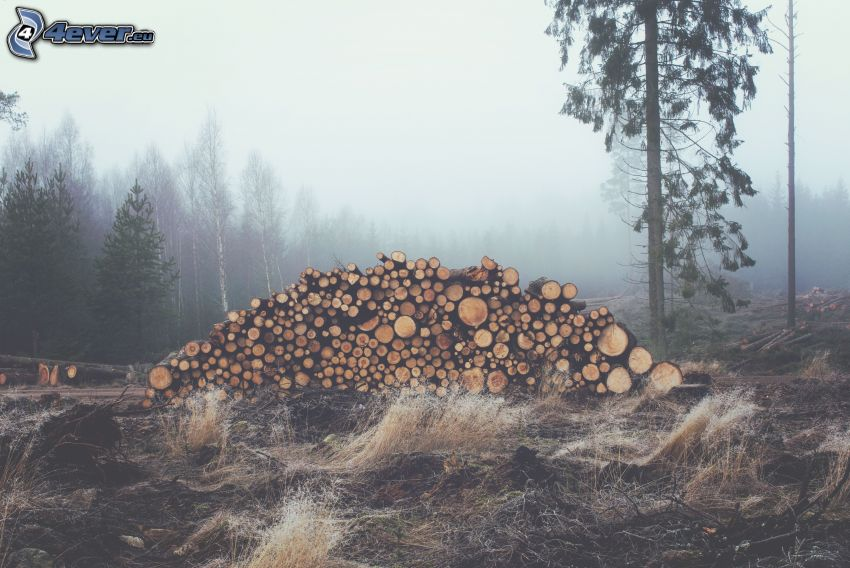 staplad ved, skog, dimma