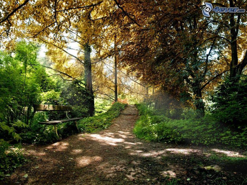 stig genom skog, bänk