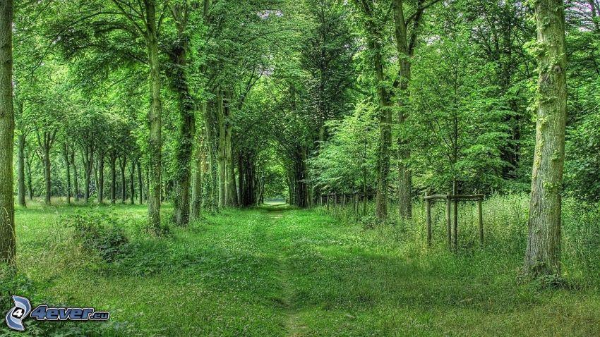 stig genom skog, grönska