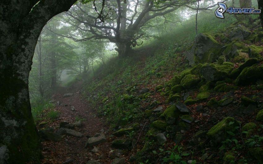 stig genom skog, mossa