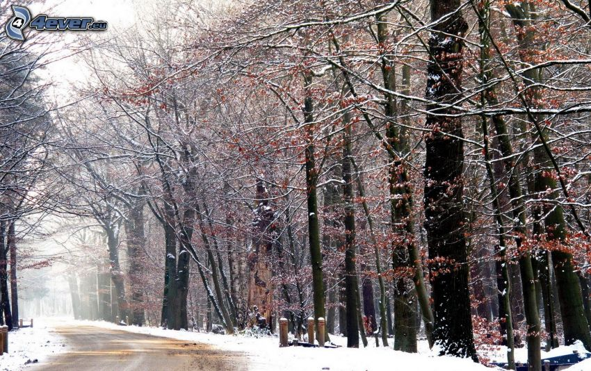 stig genom skog, snöklädda träd