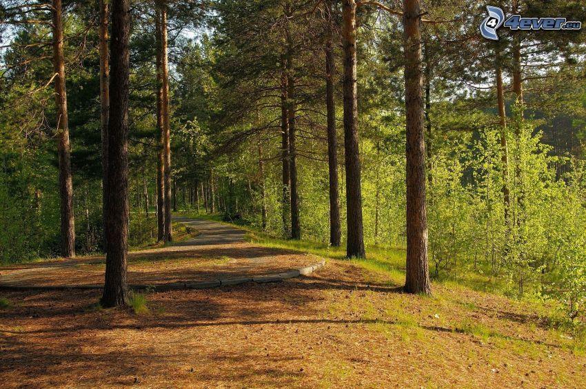 stig genom skog