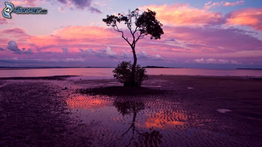 stor sjö, ensamt träd, efter solnedgången, rosa himmel