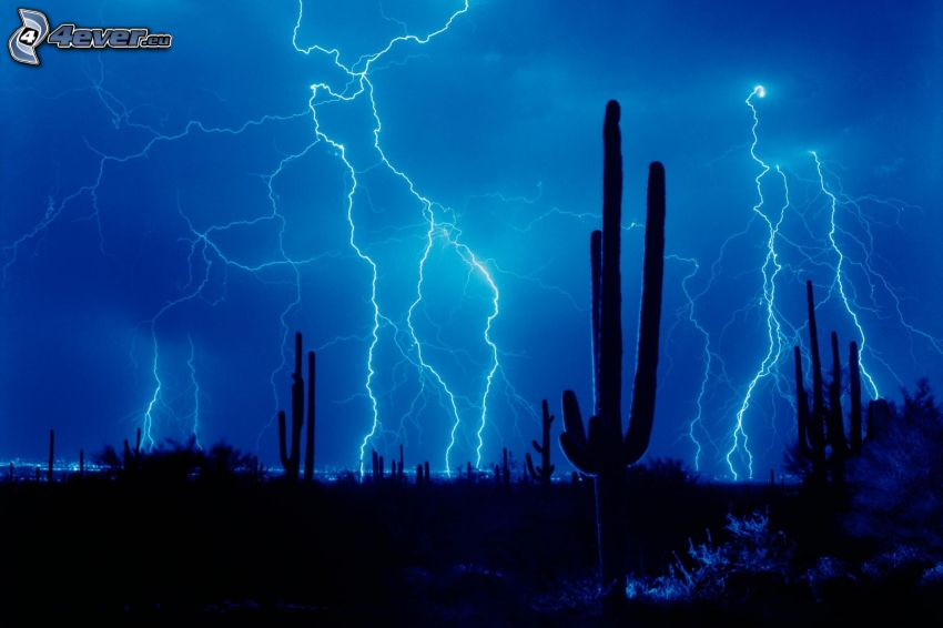 storm, blixt, kaktusar