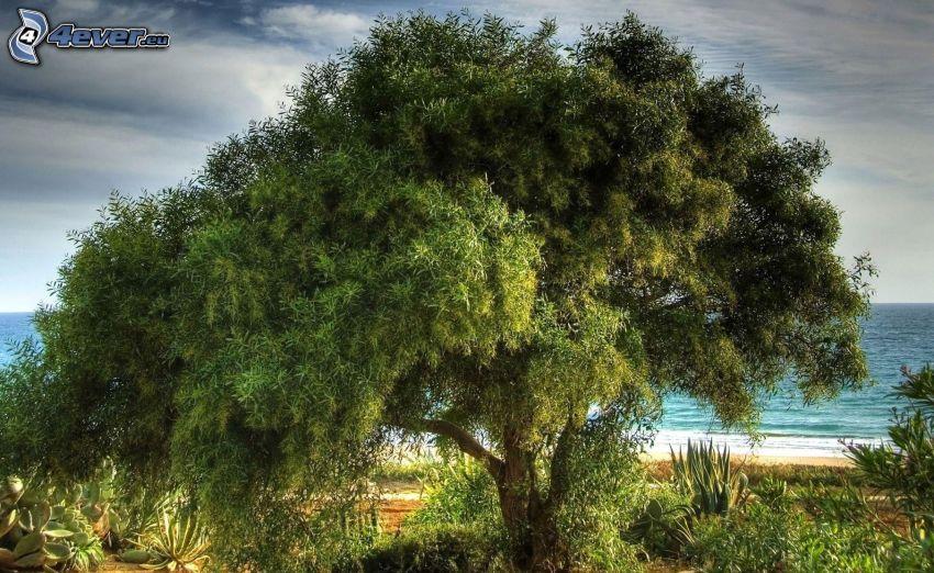 stort träd, hav