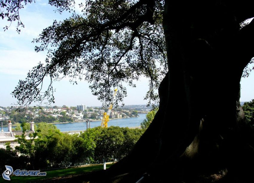 stort träd, stam, stadsutsikt