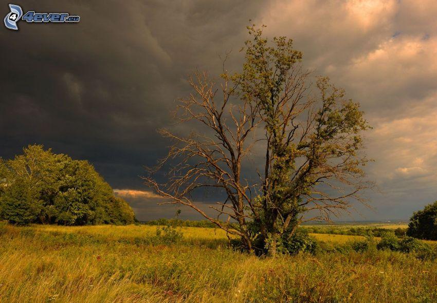 torrt träd, ensamt träd, gräs, moln