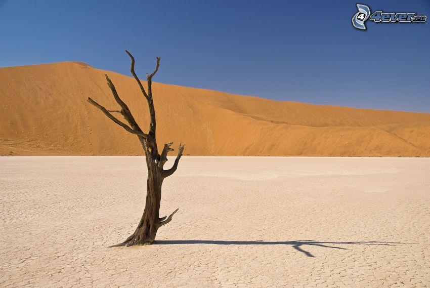 torrt träd, ensamt träd, öken, kulle