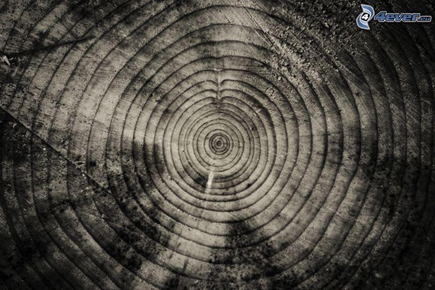 trä, årsringar, svartvitt foto