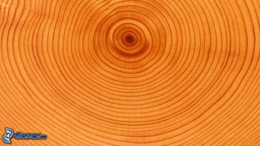 trä, årsringar