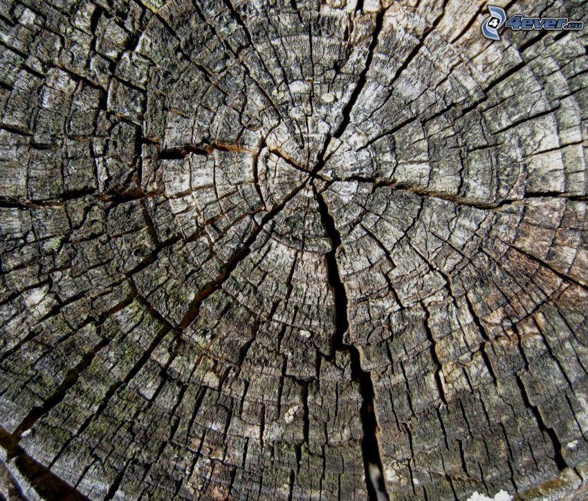 trä, sprickor