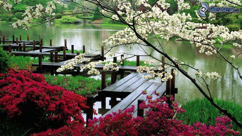 träbrygga, träd, buskar, flod