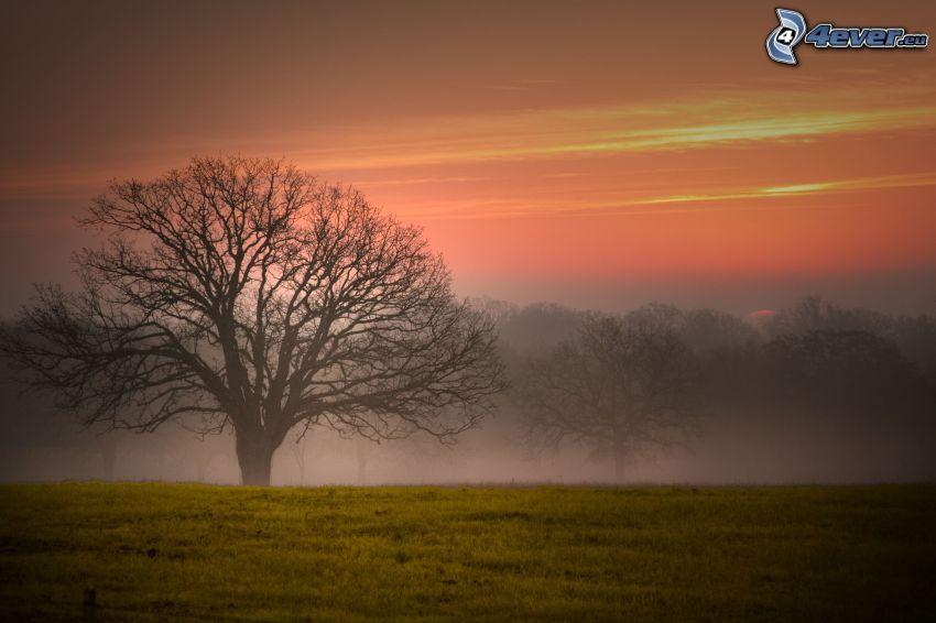 träd, dimma, kvällshimmel