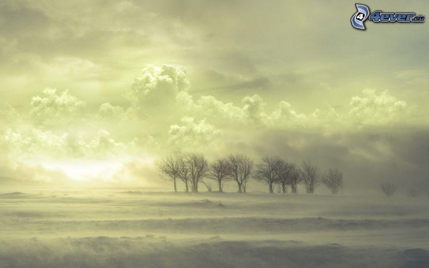 träd, dimma, moln