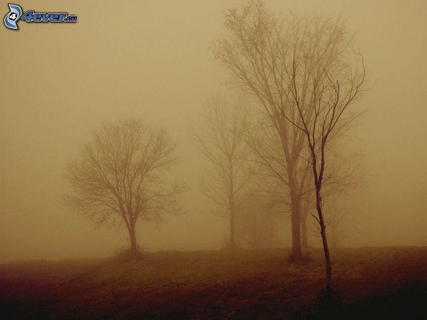 träd, dimma