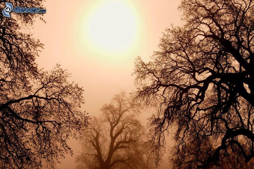 träd, grenar, dimma