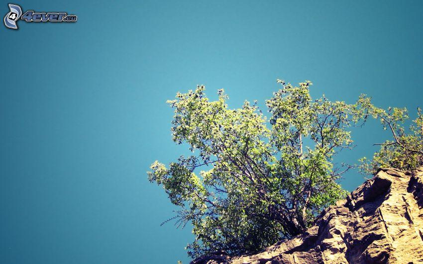 träd, klippa