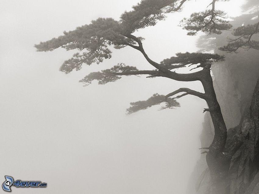 träd, klippor, dimma