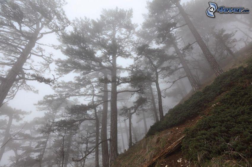 träd, kulle, dimma