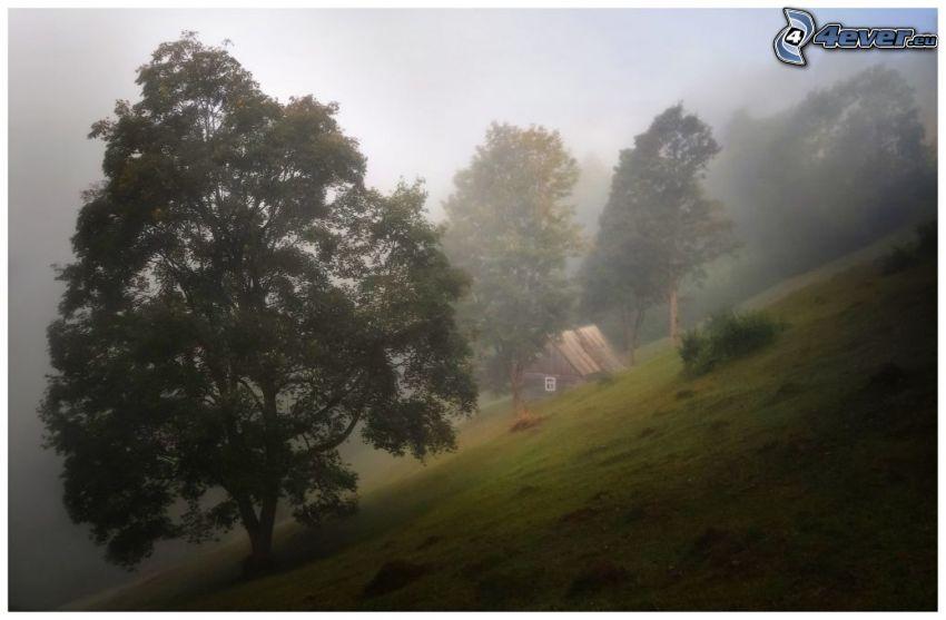 träd, kulle, hus, dimma
