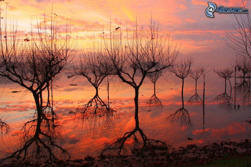 träd, sjö, efter solnedgången