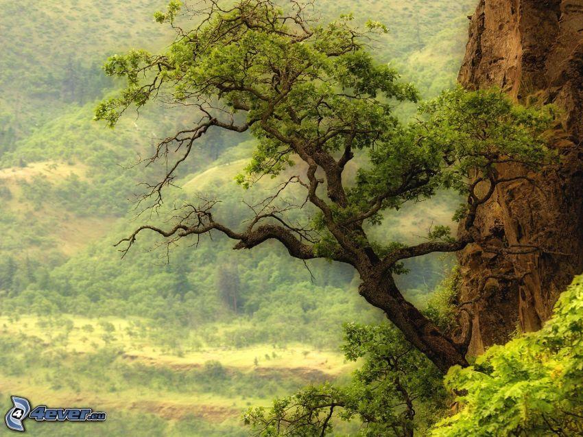 träd, skog
