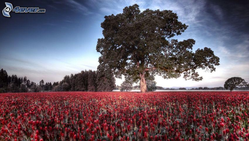 träd på äng, äng, röda blommor, himmel, HDR