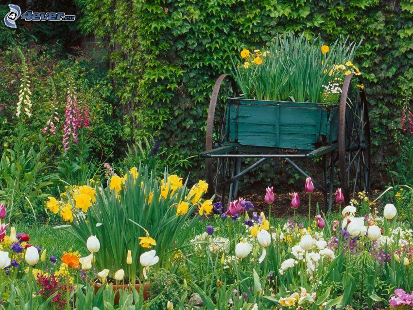 trädgård, blommor, kärra
