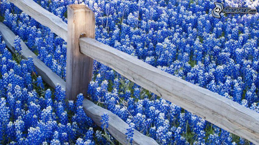 trästaket, blå blommor