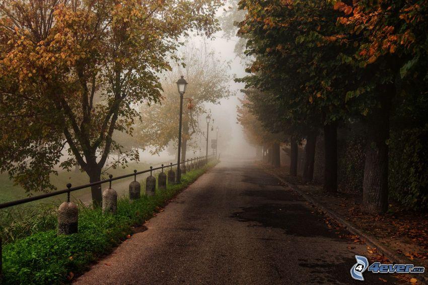 trottoar, höstträd, dimma