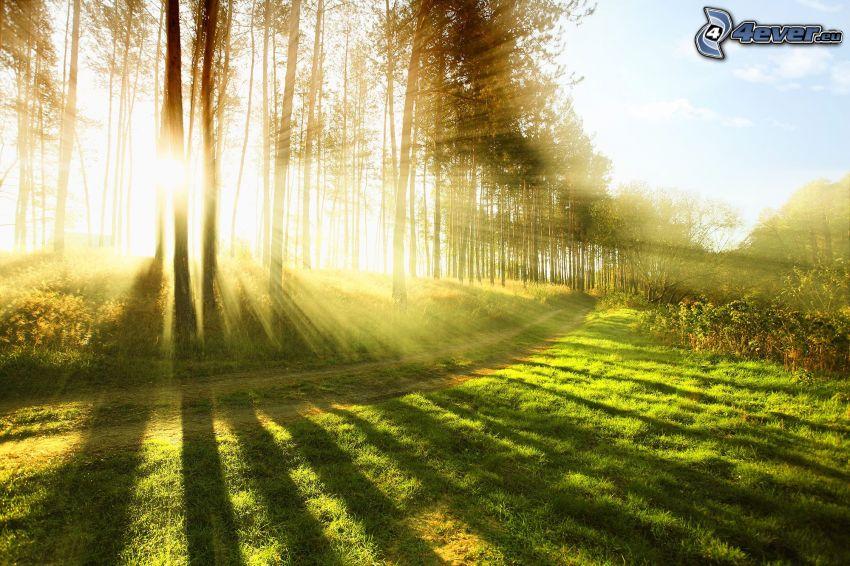 trottoar, solstrålar, grönska