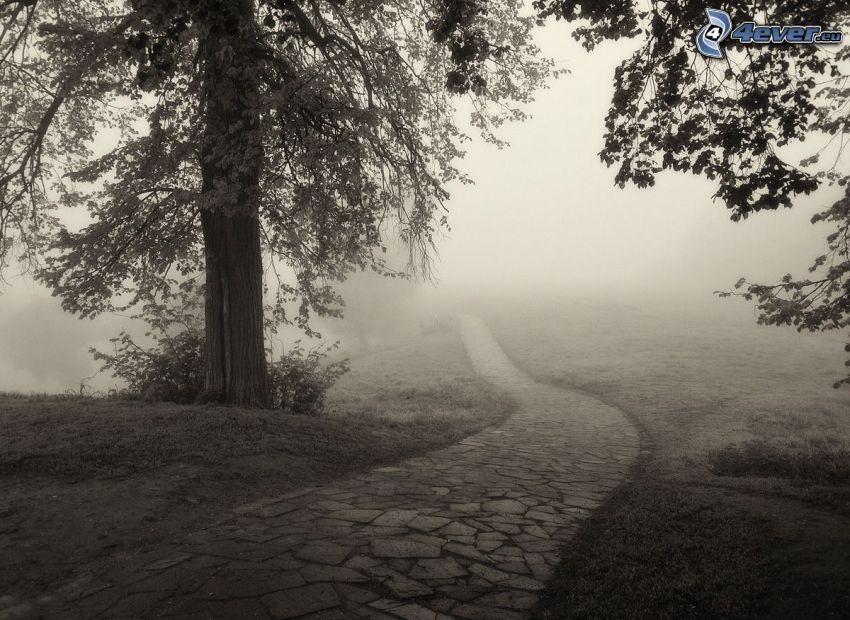 trottoar, träd, dimma, svart och vitt