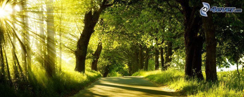 trottoar, träd, solstrålar, panorama
