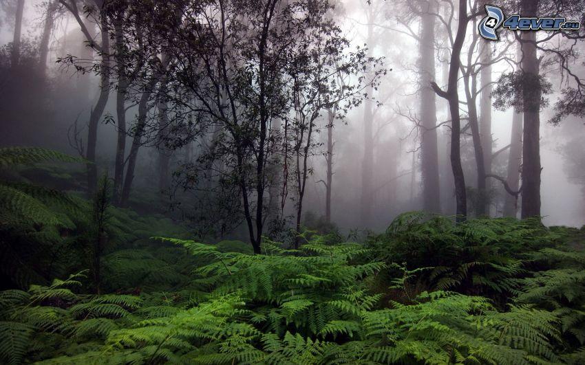 urskog, dimma, ormbunke