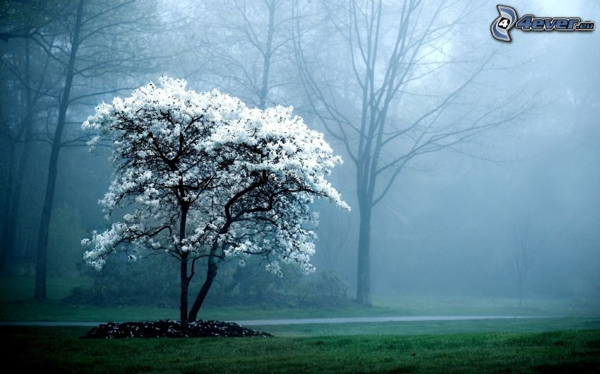 utblommat träd, dimma