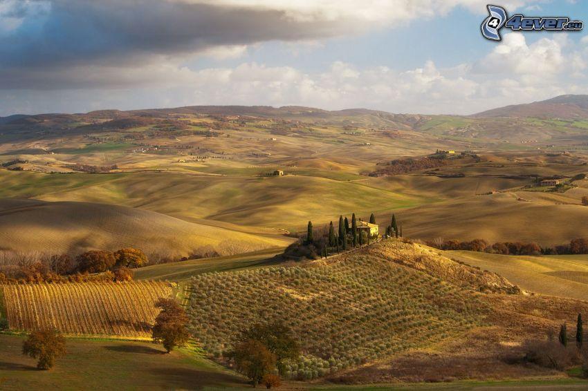 utsikt över landskap, fält, träd